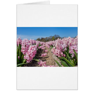 Flowers field with pink hyacinths in Holland Card