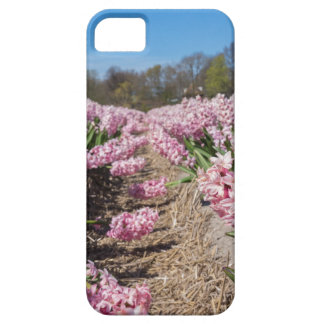 Flowers field with pink hyacinths in Holland iPhone 5 Case