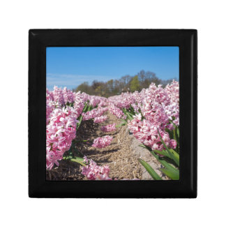 Flowers field with pink hyacinths in Holland Small Square Gift Box