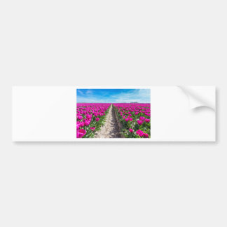 Flowers field with purple tulips and path bumper sticker