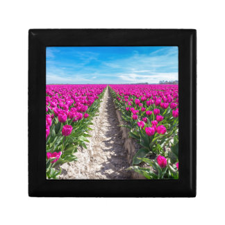 Flowers field with purple tulips and path gift box