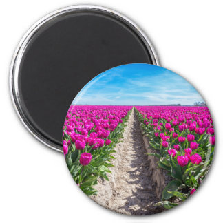 Flowers field with purple tulips and path magnet