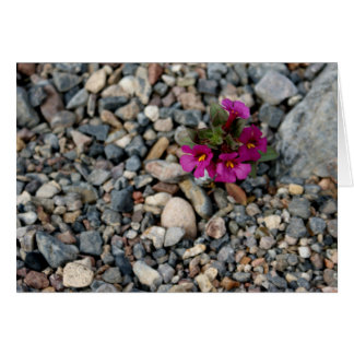 Flowers from the Rocks ~ Death Valley Note Card