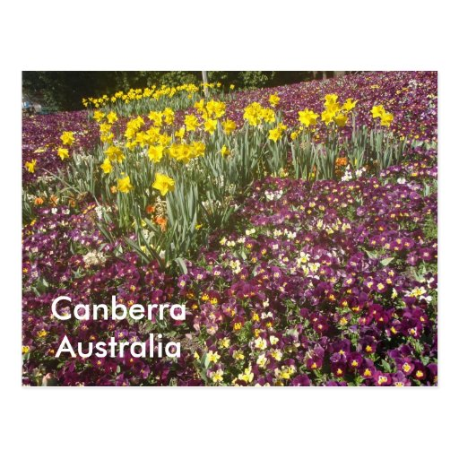 flowers in Canberra, Australia Post Card