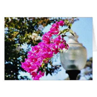 Flowers Lamps Posts Lights Cards