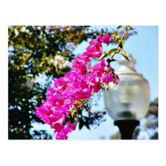 Flowers Lamps Posts Lights Post Card