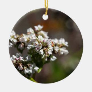Flowers of a Buckwheat plant (Fagopyrum esculentum Ceramic Ornament