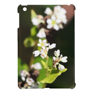 Flowers of a Buckwheat plant (Fagopyrum esculentum iPad Mini Cover
