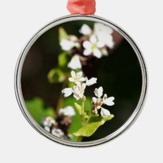 Flowers of a Buckwheat plant (Fagopyrum esculentum Metal Ornament