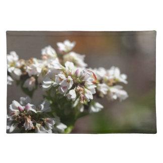 Flowers of a Buckwheat plant (Fagopyrum esculentum Placemat