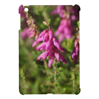 Flowers of a Dorset heath (Erica cilaris) iPad Mini Covers