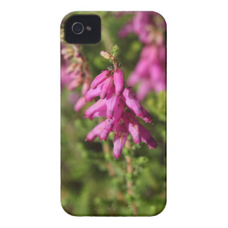 Flowers of a Dorset heath (Erica cilaris) iPhone 4 Case-Mate Case