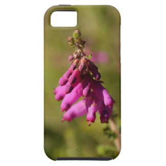 Flowers of a Dorset heath (Erica cilaris) iPhone 5 Case