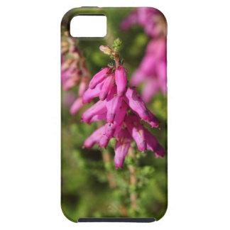 Flowers of a Dorset heath (Erica cilaris) iPhone 5 Covers