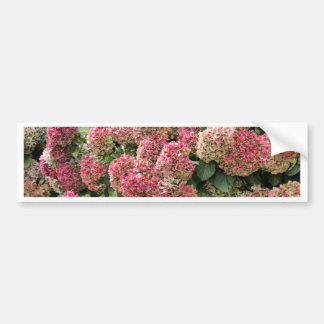 Flowers of a French hydrangea (Hydrangea macrophyl Bumper Sticker