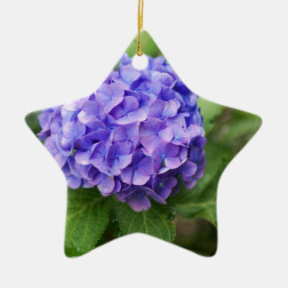 Flowers of a French hydrangea (Hydrangea macrophyl Ceramic Ornament