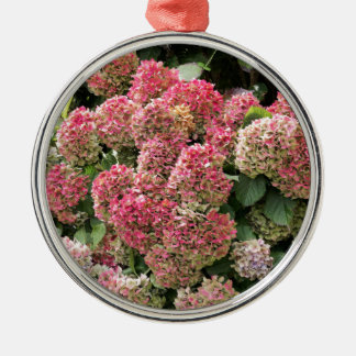 Flowers of a French hydrangea (Hydrangea macrophyl Metal Ornament