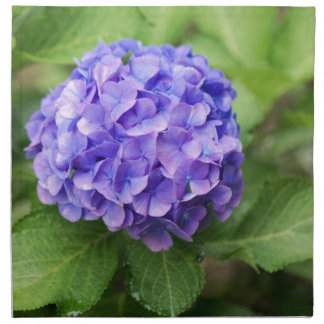 Flowers of a French hydrangea (Hydrangea macrophyl Napkin