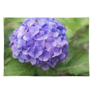 Flowers of a French hydrangea (Hydrangea macrophyl Placemat