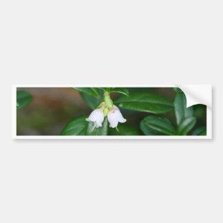 Flowers of a wild lingonberry (Vaccinium vitis-ide Bumper Sticker