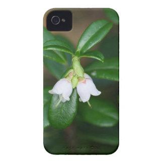 Flowers of a wild lingonberry (Vaccinium vitis-ide Case-Mate iPhone 4 Cases