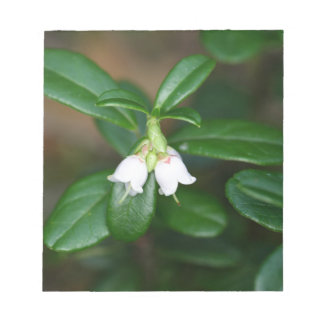 Flowers of a wild lingonberry (Vaccinium vitis-ide Notepad