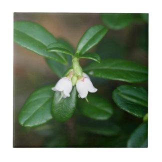 Flowers of a wild lingonberry (Vaccinium vitis-ide Tile