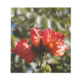 Flowers of an African tuliptree Notepad