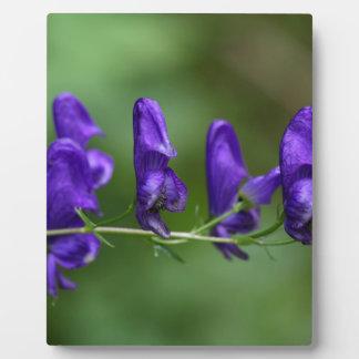 Flowers of an Akonite (Aconitum variegatum) Plaque