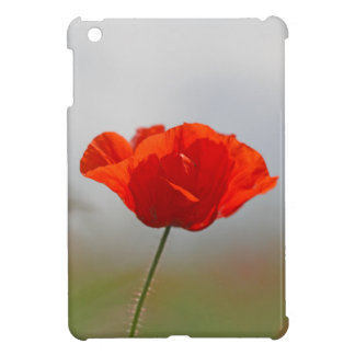 Flowers of common poppy in a field. cover for the iPad mini
