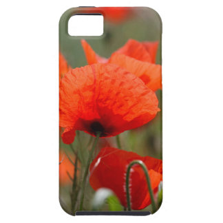Flowers of common poppy in a field. iPhone 5 cases