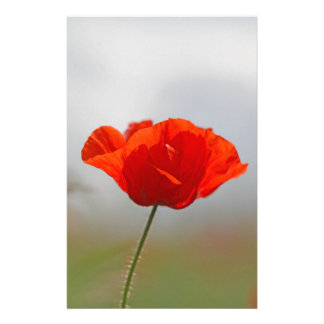 Flowers of common poppy in a field. personalised stationery