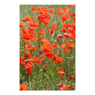 Flowers of common poppy in a field. personalized stationery