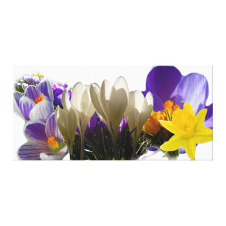 Flowers of Spring Stretched Canvas Prints