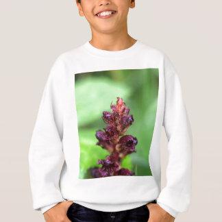 Flowers of the broomrape Orobanche gracilis Sweatshirt