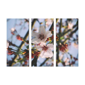 Flowers of the cherry blossoms on a spring day stretched canvas prints
