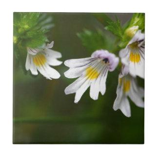 Flowers of the Eyebright Euphrasia rostkoviana Ceramic Tile