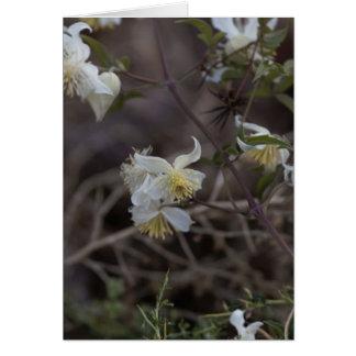Flowers of Traveller Joy (Clematis brachiata) Card