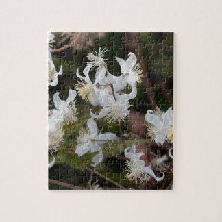 Flowers of Traveller Joy (Clematis brachiata) Jigsaw Puzzle