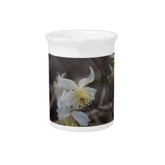 Flowers of Traveller Joy (Clematis brachiata) Pitcher