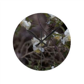 Flowers of Traveller Joy (Clematis brachiata) Round Clock