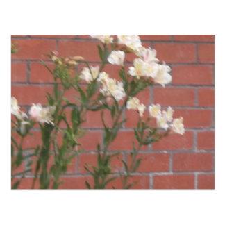 Flowers on Brick Postcard