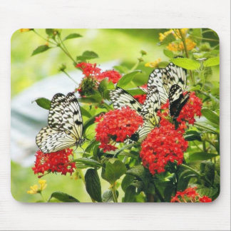 Flowers Plants Butterfly Butterflies Mouse Pad