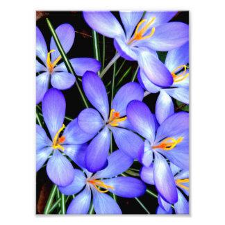Flowers Professional Photo Paper (Satin