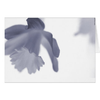 Flower's Serenity Card