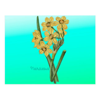 Flowers Yellow Narcissus Vintage Bouquet Postcard