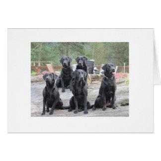 Flowsco Labradors Card