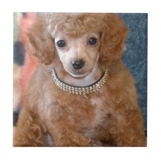 Fluffy Apricot Poodle Puppy Dog Ceramic Tile