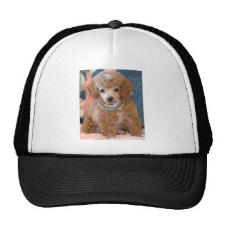 Fluffy Apricot Poodle Puppy Dog Mesh Hat