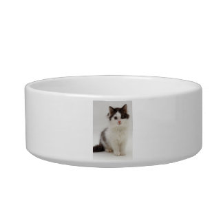 Fluffy Black and White Kitten Cat Pet Bowl